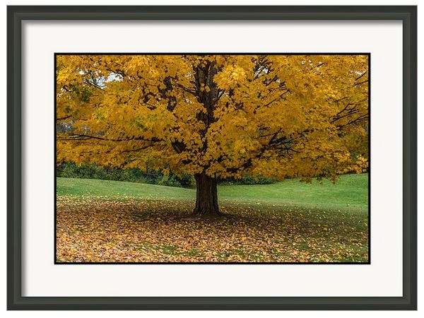 autumn yellow framed